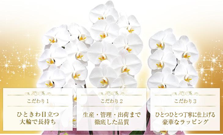 1,花が長持ちする。2,生産・管理・出荷まで徹底した品質。3,ひとつひとつ丁寧に仕上げる豪華なラッピング