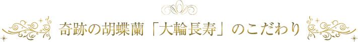 奇跡の胡蝶蘭「大輪長寿」のこだわり