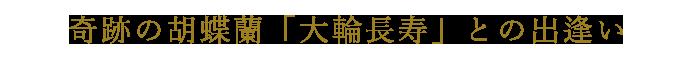奇跡の胡蝶蘭「大輪長寿」との出逢い