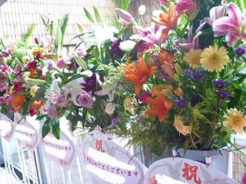 開店のお祝いに、スタンド花・胡蝶蘭・観葉植物を用意します♪