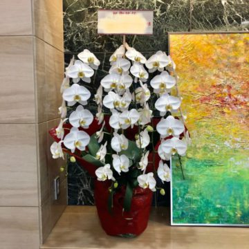 開店祝い・開業祝い・移転祝い・周年祝いに胡蝶蘭をお届けいたします。