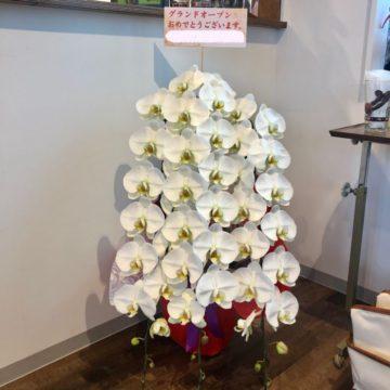 名古屋市の開店祝い・開業祝い・御就任祝いなどに胡蝶蘭をお届けいたします。