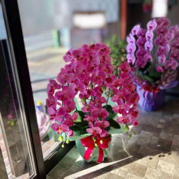 光触媒加工胡蝶蘭 アーティシャルフラワー(高品質造花)品揃え豊富です。